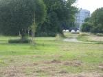 10 Zieseln und ein Feldhase am Gelände des Heeresspitals