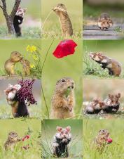 Artenschutz-Kalender 2014