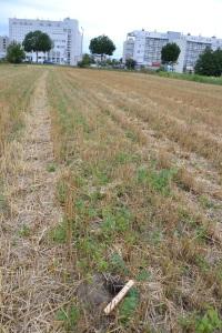 Ziesel-Habitat südlich des Wiener Heeresspital