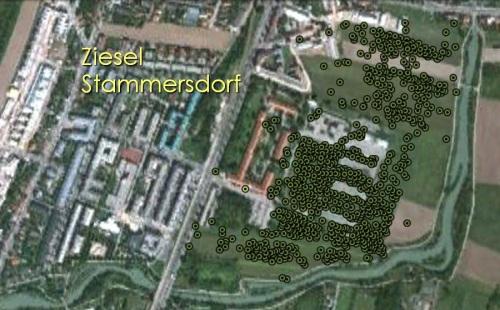 Verteilungskarte Ziesel beim Heeresspital. Quelle: Ilse Hoffmann, Universität Wien, Stand 09/2011