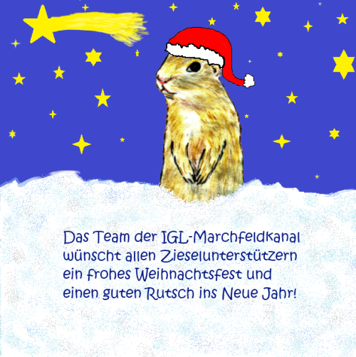 Das Team der IGL-Marchfeldkanal wünscht allen Ziesel-Unterstützern ein frohes Weihnachtsfest und einen guten Rutsch ins Neue Jahr!