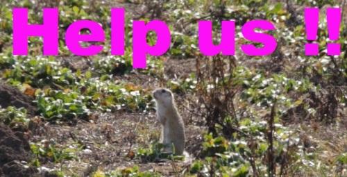 Ziesel beim Wiener Heeresspital - Help us !!