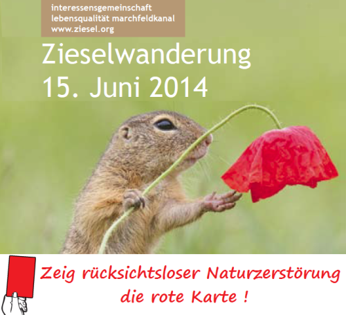 Ziesel-Wanderung 15. Juni 2014 / Foto: Leopold Kanzler